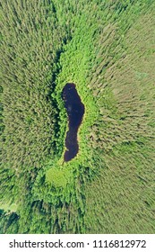 Aerial view of lake hidden in pine forest