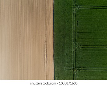 Aerial view of a land with sown green fields in countryside in spring day. Land with grown plants