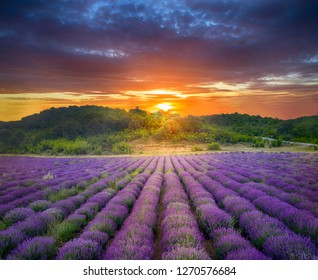 Aerial view of a landscape with lavender field at sunset - Image