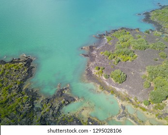 Aerial view of lava fields near the sea on Rangitoto, near Auckland, New Zealand