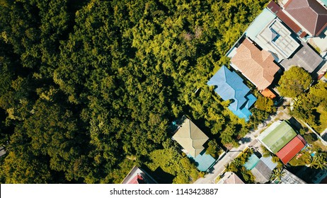 Aerial view of looking down of green tree and countryside houses at sunset hour.