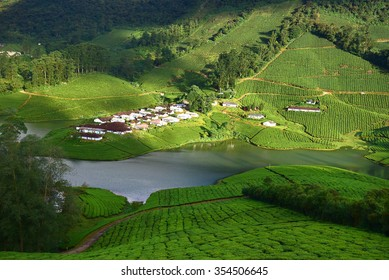 Aerial view of lush green tea estate at Meghamalai, God's own country, Kerala tourism. Incredible India. Far from the madding crowd. Incredible India.
