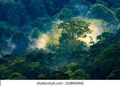 Aerial view of a magical early morning sunrise in the Tapah rainforest in Malaysia.