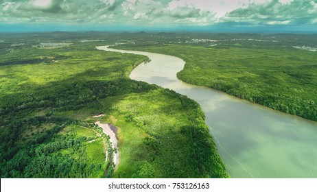 Aerial view mangrove forest area