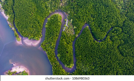 Aerial view Mangrove forest and canal through the forest.