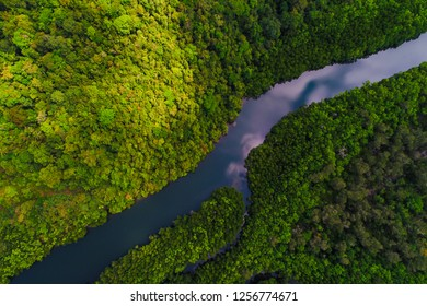 Aerial view of mangrove tropical rainforest with river from mountain to sea, Nature life