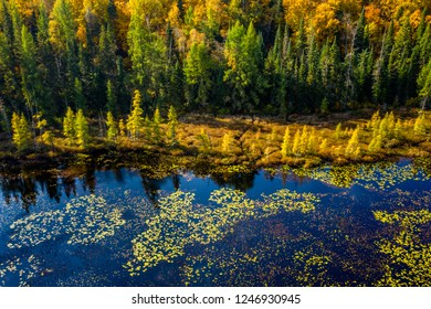 Aerial view of marshland and forest in autumn in Ontario Canada
