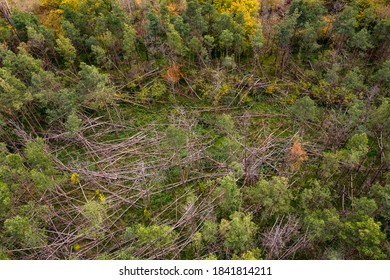 Aerial view of a Mikado style forest dieback caused by storms and drought in the German coniferous forest