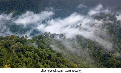 Aerial view of mist, cloud and fog hanging over a lush tropical rainforest after a storm
