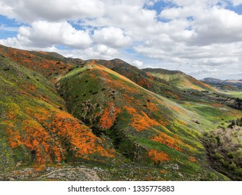Aerial view of Mountain with California Golden Poppy and Goldfields blooming in Walker Canyon, Lake Elsinore, CA. USA. Bright orange poppy flowers during California desert super bloom spring season.
