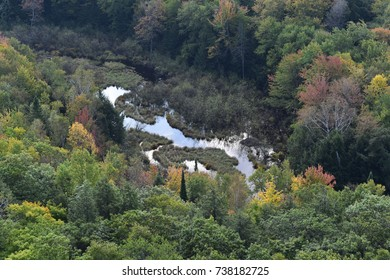 Aerial view of a mountain stream flowing through a forest