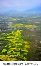 Aerial view of mustard field, Srinagar, India