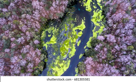 Aerial View of Natural Spring & River - Ichetuknee Springs in Alachua gainesville florida