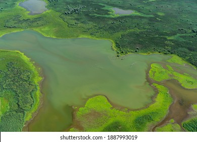 Aerial view of a nature reserve area with swamp, water, green grass and trees in The Netherlands. It is located in lake Oostvaardersplassen between Almere and Lelystad.