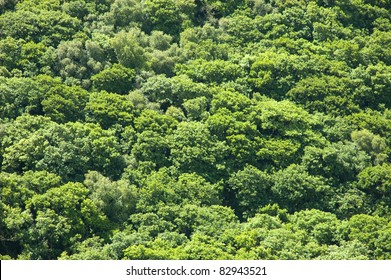 Aerial view of an oak woodland