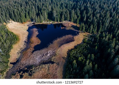 Aerial view on Black lake and marshes, forest in background on Pohorje mountain, Slovenia, autumn morning