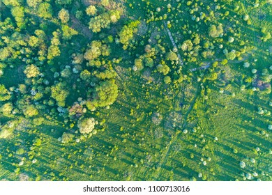 Aerial view on the blooming apple orchard