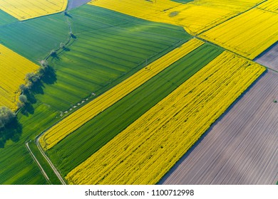 Aerial view on the large yellow colza field