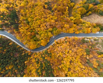 aerial view on spiral road in yellow autumn forest