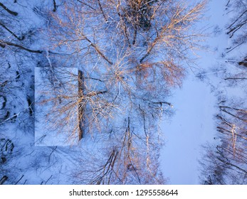 Aerial view on  winter forest