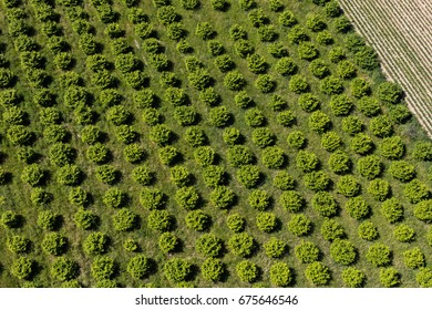 aerial view of the orchard in Poland