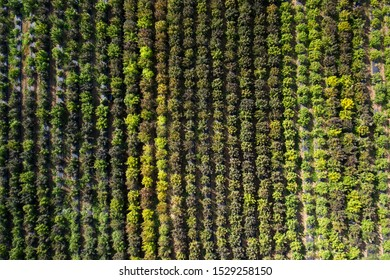 Aerial view of an outdoor hemp grow in Southern Oregon