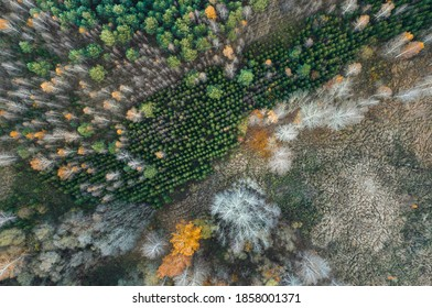 Aerial view over deforestation. Tree felling in the middle of forest. Autumn colors at sunrise. Abstract look on earth texture.