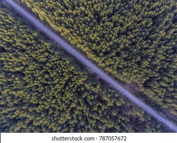 Aerial view over European pine tree forest with a road going through it.
