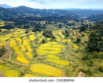 Aerial view over idyllic terraced paddy fields on the hillside with golden rice crops bathed in bright sunlight before harvesting in autumn, in Hoshi Mountain Pass in Tokamachi, Niigata, Japan