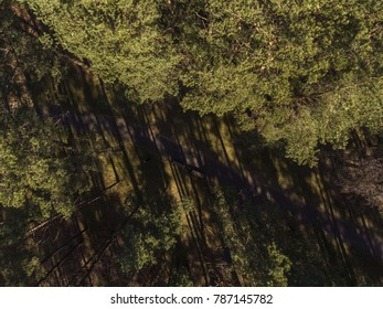 Aerial view over pine tree forest with a path going through it in Lithuania. During sunny spring day.