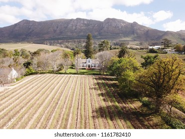Aerial view over vineyard in Cape Town, South Africa