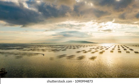 aerial view of oyster beds on pond Thau in Mèze in Occitania, France