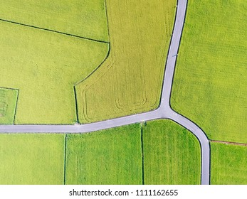Aerial View of Paddy Field from Dongshan Township, Yilan, Taiwan.