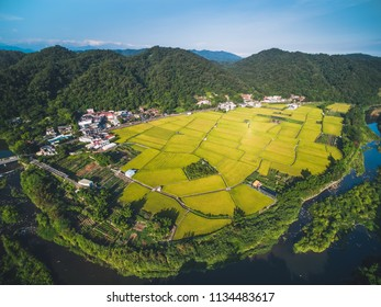 Aerial View of Paddy Field - Ripening of paddy field birds eye view use the drone in morning, shot in Guanxi Township, Hsinchu, Taiwan.