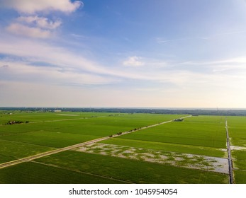 Aerial view of paddy field at Sekinchan, Malaysia. Agriculture landscape. Aerial photography.