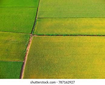Aerial view of paddy field taken in Sekinchan Malaysia