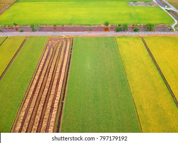 Aerial view of paddy field taken in Sekinchan, Malaysia