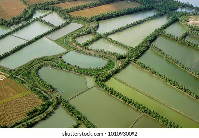 Aerial view of paddy,rice,fields,coconut plams and  harvested water bodies,reservoirs from district Kakinada also known as rice bowl ,Andhra Pradesh India,Asia