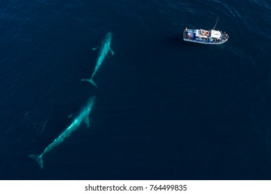 From an aerial view, a pair of blue whales swims under the surface in Monterey Bay, California.