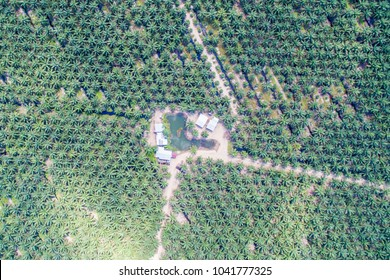 aerial view of palm oil plantation