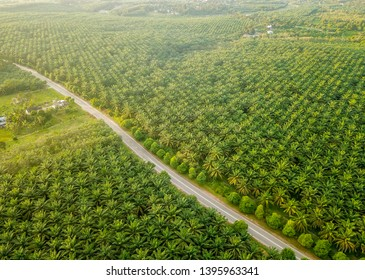Aerial view of palm oil plantation in Asia. Agricultural background