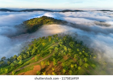 Aerial view of pine forest near Highway 27c or Provincial Route 723 from Da Lat city to Nha Trang city at Long Lanh pass, Lam Dong province, Vietnam