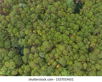Aerial view of pine tree forest in mountain.Scenery Bird eye view of asphalt road landscape.High view from drone save drive transport and journey in countryside concept