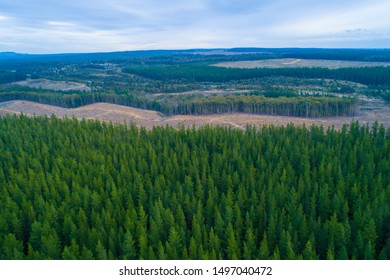 Aerial view of pine trees plantation in Melbourne, Australia