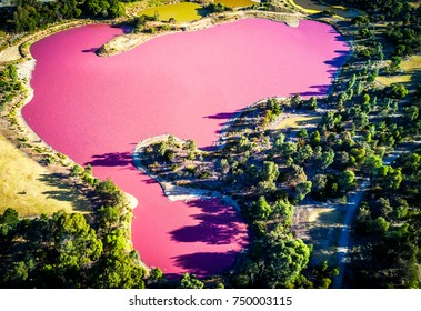Aerial view of a pink lake in Melbourne (Australia) on a sunny day during the golden hour.