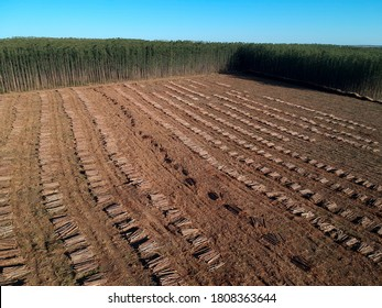 Aerial view of Plantation Eucalyptus trees being harvested for wood chipping in Brazil
