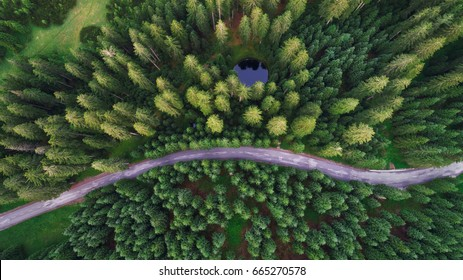 Aerial view of Pokljuka forest and meadows