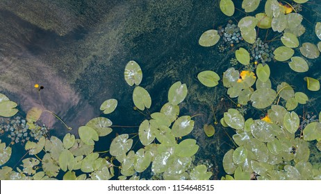 Aerial view of pond with yellow waterlily flowers, green leaf, duckweed in a summer day. Photo from the drone.