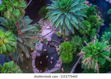 Aerial view of the pool and tropical habitat from the 25th floor of a hotel room.