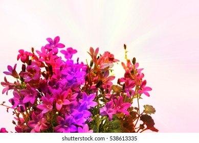 Little white bell shaped flowers images stock photos vectors aerial view potted purple flowers on white background little bell shaped flower used for mightylinksfo